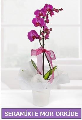 Seramik içerisinde birinci kalite tek dallı mor orkide  Sakarya online çiçek gönderme sipariş