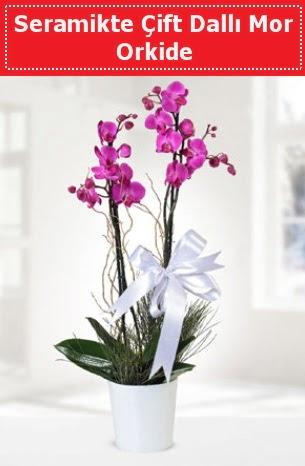 Seramikte Çift Dallı Mor Orkide  Sakarya çiçek satışı