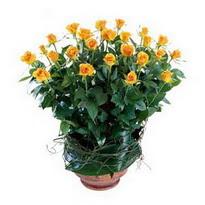 Sakarya çiçek yolla  10 adet sari gül tanzim cam yada mika vazoda çiçek