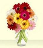 Sakarya çiçek siparişi vermek  cam yada mika vazoda 15 özel gerbera