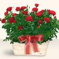 Sakarya online çiçek gönderme sipariş  11 adet kirmizi gül sepette