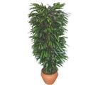 Sakarya kaliteli taze ve ucuz çiçekler  Özel Mango 1,75 cm yüksekliginde