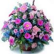 karisik mevsim kir çiçekleri  Sakarya cicek , cicekci
