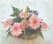 gerbera çiçeklerinde sepet   Sakarya cicekciler , cicek siparisi