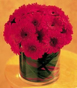 Sakarya çiçek online çiçek siparişi  23 adet gerbera çiçegi sade ve sik cam içerisinde