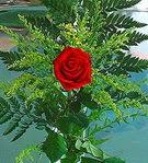 1 adet kirmizi gül buketi   Sakarya çiçek yolla , çiçek gönder , çiçekçi
