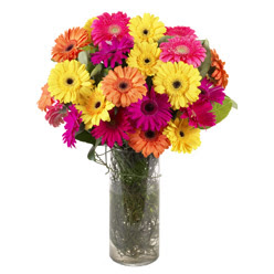KARISIK GERBERALARDAN CAM VAZO TANZIMI  Sakarya internetten çiçek satışı