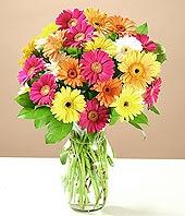Sakarya ucuz çiçek gönder  17 adet karisik gerbera