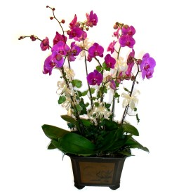 Sakarya çiçek gönderme sitemiz güvenlidir  4 adet orkide çiçegi