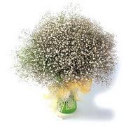 Sakarya çiçekçi mağazası  cam yada mika vazo içerisinde cipsofilya demeti