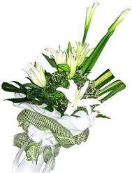 Sakarya internetten çiçek satışı  3 dal kazablanka çiçegi ve yesillikler