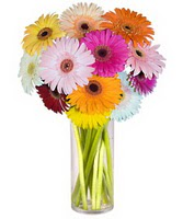 Sakarya online çiçekçi , çiçek siparişi  Farkli renklerde 15 adet gerbera çiçegi