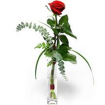 Sakarya çiçekçi telefonları  Sana deger veriyorum bir adet gül cam yada mika vazoda