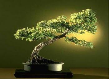 ithal bonsai saksi çiçegi  Sakarya çiçek mağazası , çiçekçi adresleri