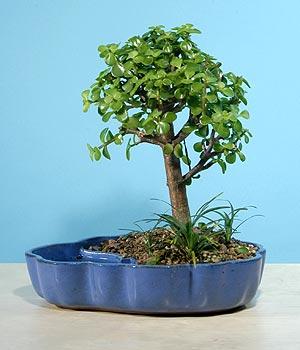 ithal bonsai saksi çiçegi  Sakarya yurtiçi ve yurtdışı çiçek siparişi