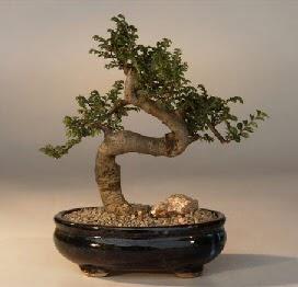 ithal bonsai saksi çiçegi  Sakarya çiçekçi telefonları