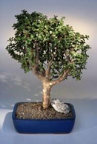 Sakarya uluslararası çiçek gönderme  ithal bonsai saksi çiçegi  Sakarya yurtiçi ve yurtdışı çiçek siparişi