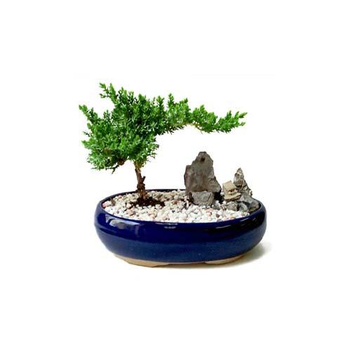 ithal bonsai saksi çiçegi  Sakarya uluslararası çiçek gönderme