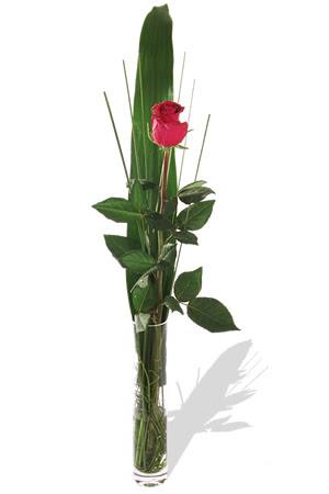 1 adet cam vazo içerisinde kirmizi gül  Sakarya hediye sevgilime hediye çiçek