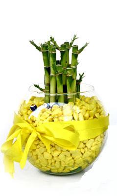 cam fanus içerisinde bambo  Sakarya güvenli kaliteli hızlı çiçek