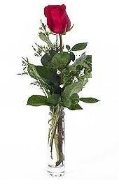 Vazo içerisinde 1 adet kirmizi gül  Sakarya çiçek yolla