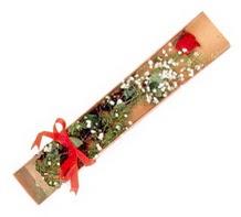 1 adet kirmizi gül  Sakarya 14 şubat sevgililer günü çiçek