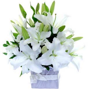Sakarya cicekciler , cicek siparisi  2 dal cazablanca vazo çiçeği
