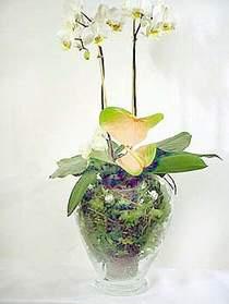 Sakarya anneler günü çiçek yolla  Cam yada mika vazoda özel orkideler
