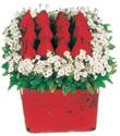 Sakarya uluslararası çiçek gönderme  Kare cam yada mika içinde kirmizi güller - anneler günü seçimi özel çiçek