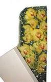 Sakarya uluslararası çiçek gönderme  Kutu içerisine dal cymbidium orkide