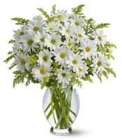Vazo içerisinde beyaz krizantem çiçekleri  Sakarya çiçek mağazası , çiçekçi adresleri
