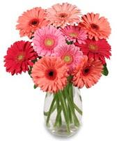 vazo içerisinde 13 adet gerbera çiçeği  Sakarya kaliteli taze ve ucuz çiçekler