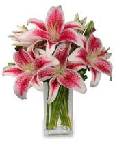 Vazo içerisinde 5 dal kazablanka çiçeği  Sakarya çiçek yolla