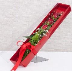 Kutu içerisinde 3 adet kırmızı gül  Sakarya İnternetten çiçek siparişi