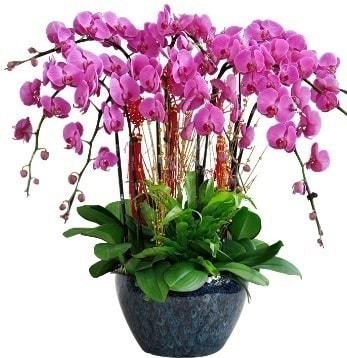 9 dallı mor orkide  Sakarya çiçekçi telefonları