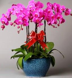 7 dallı mor orkide  Sakarya ucuz çiçek gönder