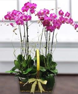 4 dallı mor orkide  Sakarya internetten çiçek satışı