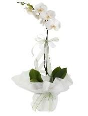 1 dal beyaz orkide çiçeği  Sakarya çiçek yolla , çiçek gönder , çiçekçi