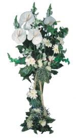 Sakarya çiçekçi mağazası  antoryumlarin büyüsü özel