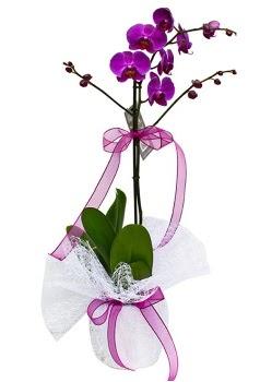 Tek dallı mor orkide  Sakarya 14 şubat sevgililer günü çiçek