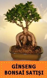 Ginseng bonsai satışı japon ağacı  Sakarya çiçek gönderme sitemiz güvenlidir
