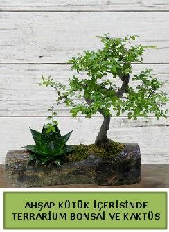 Ahşap kütük bonsai kaktüs teraryum  Sakarya online çiçekçi , çiçek siparişi