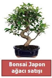 Japon ağacı bonsai satışı  Sakarya kaliteli taze ve ucuz çiçekler