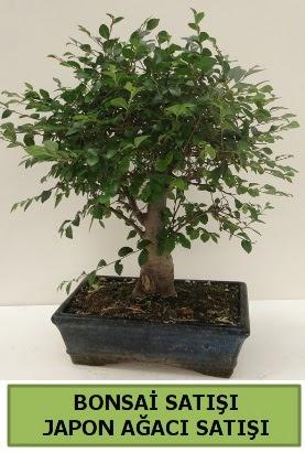 Minyatür bonsai japon ağacı satışı  Sakarya cicek , cicekci