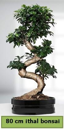 80 cm özel saksıda bonsai bitkisi  Sakarya 14 şubat sevgililer günü çiçek
