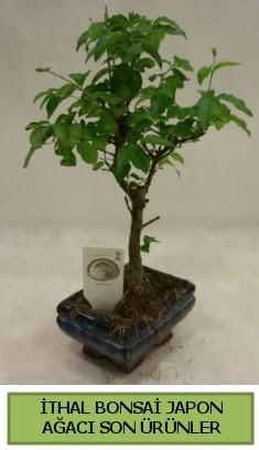İthal bonsai japon ağacı bitkisi  Sakarya çiçek , çiçekçi , çiçekçilik