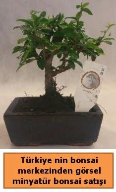 Japon ağacı bonsai satışı ithal görsel  Sakarya cicekciler , cicek siparisi