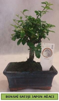 Minyatür bonsai ağacı satışı  Sakarya uluslararası çiçek gönderme