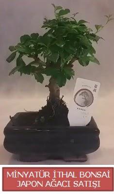 Küçük görsel bonsai japon ağacı bitkisi  Sakarya hediye sevgilime hediye çiçek
