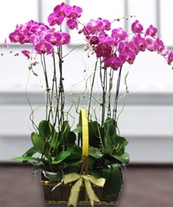 7 dallı mor lila orkide  Sakarya cicek , cicekci